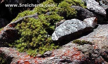 Steine und Moos