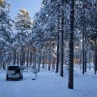 VW T4 im winterlichen Wald