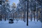 im Wald, minus 12°C