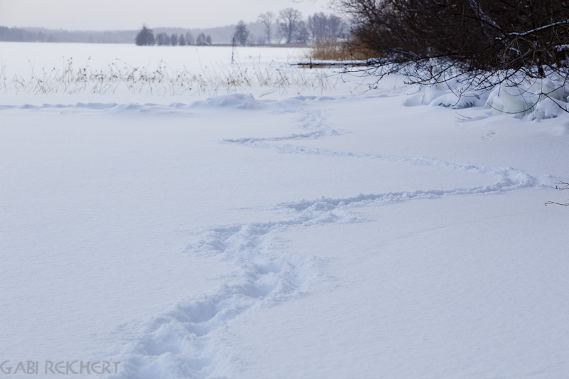 Spuren im Schnee auf dem See