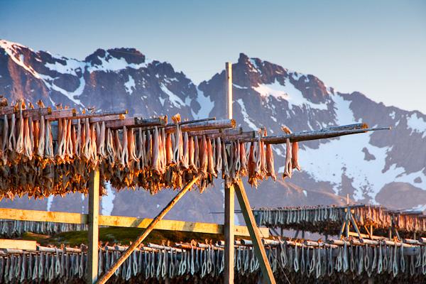 Stockfisch, Lofoten, Norwegen