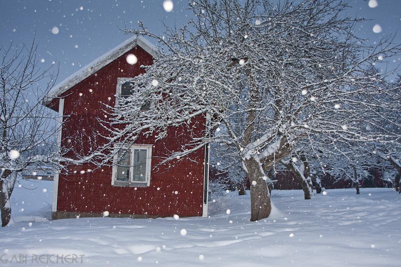 warum sind fast alle schwedischen Häuser rot?