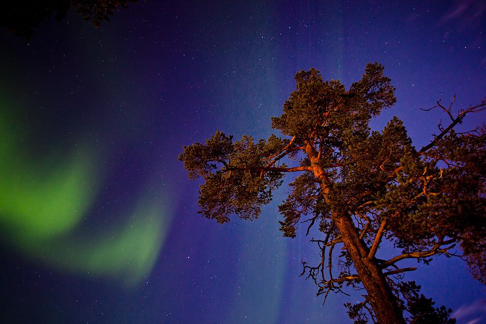 Nordlicht und herbstlicher Baum