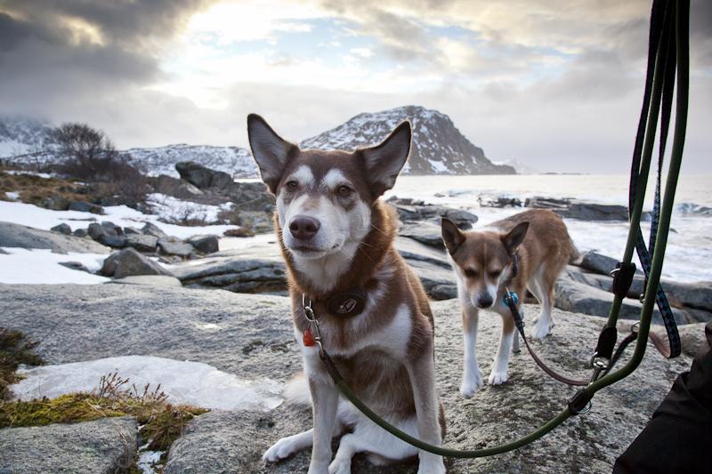 nordische Hunde von Oliver und Karen