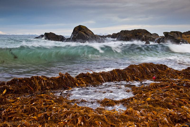 Tang und Wellen und Flut