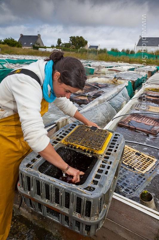 Maryvonne zeigt uns die Abalonekästen