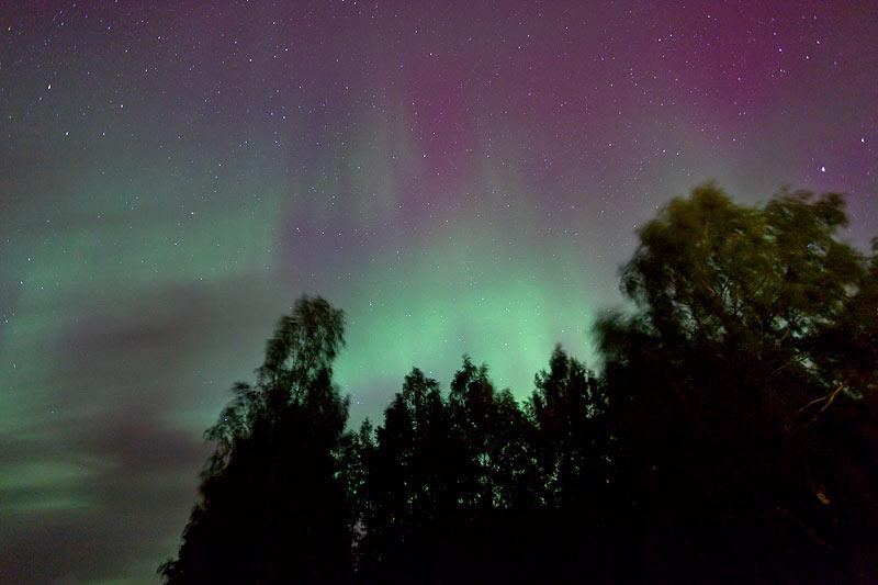 Nordlicht über den Bäumen