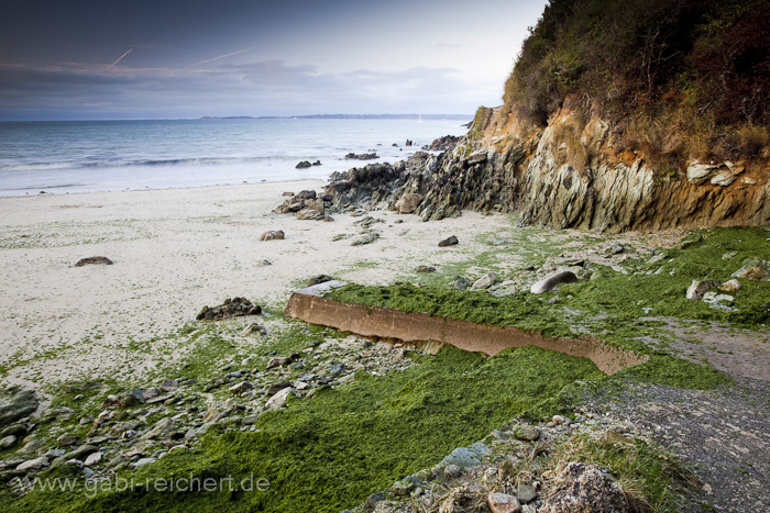 algen in der Bretagne