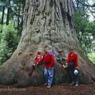 der Baum und die fünf Reicherts