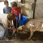 Auf der Farm in Cornwall