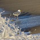 auf der Flucht vor der Welle