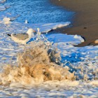 Möwe und Welle