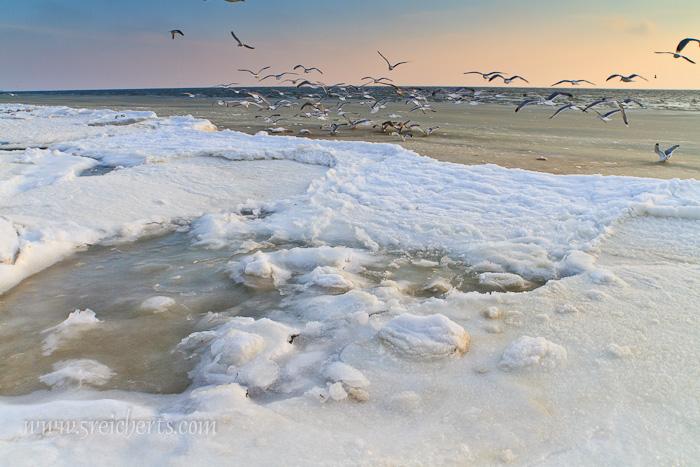 gefrorener Strand und Möwen