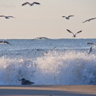 Möwen und Wellen