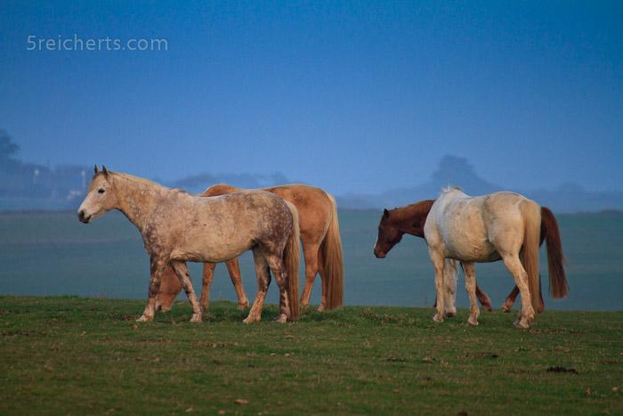 schaut mal das weiße Pferd rechts an:-)