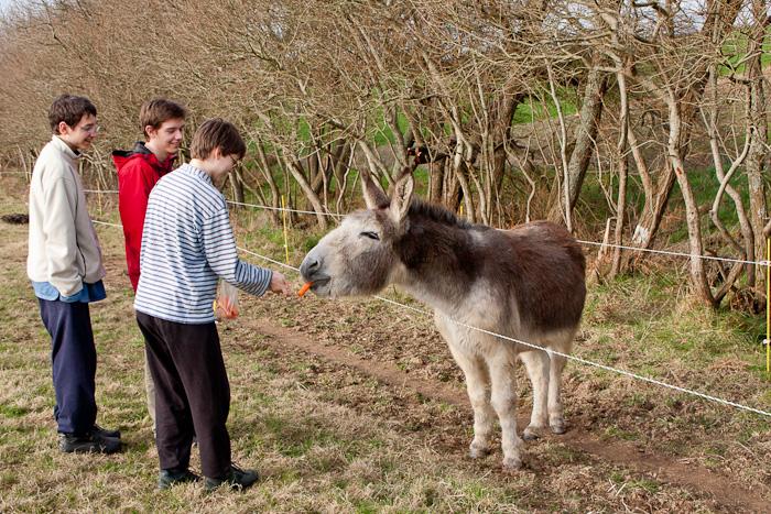 Besuch beim Esel