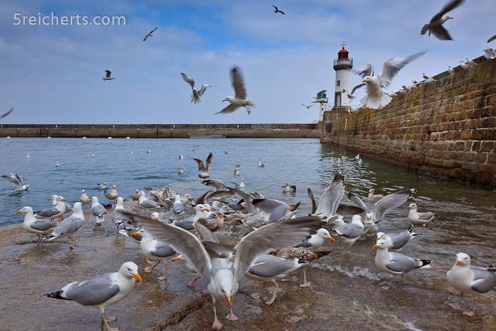 Möwen im Hafen