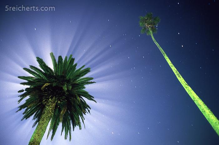 Vollmond hinter der Palme