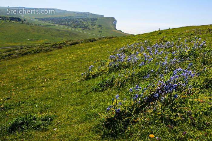 blaue Blümchen, England