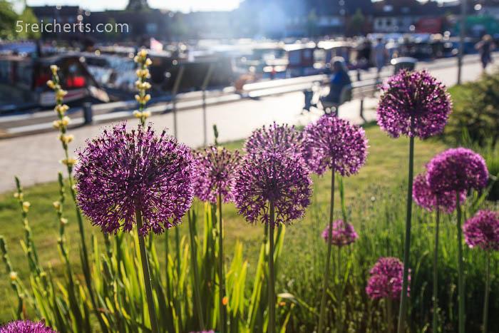Blumen und Norrowboats, Stratford, England