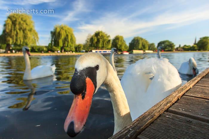 von mir gibts Nix!, Stratford, England