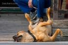 der Hund kann wirklich genießen!