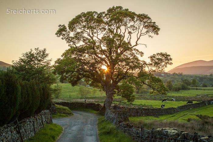 Sonnenuntergang hinter einer Baumkrone
