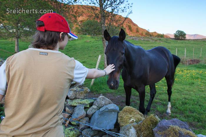 Amy streichelt ein neugieriges Pferd