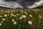 Blumenwiese und Regenwolken