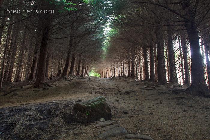 durch den Wald zum Old Man of Storr