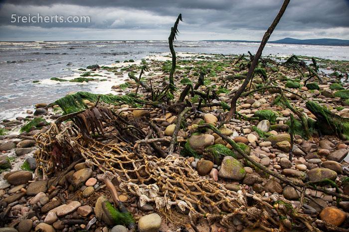einer der angeschwemmten Bäume und die darin gefangenen Fischernetze