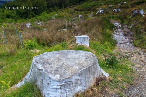 Kahlschlag an den Victoria Falls!! Wir waren wirklich schockiert!! Denn das waren richtig alte Bäume gewesen!