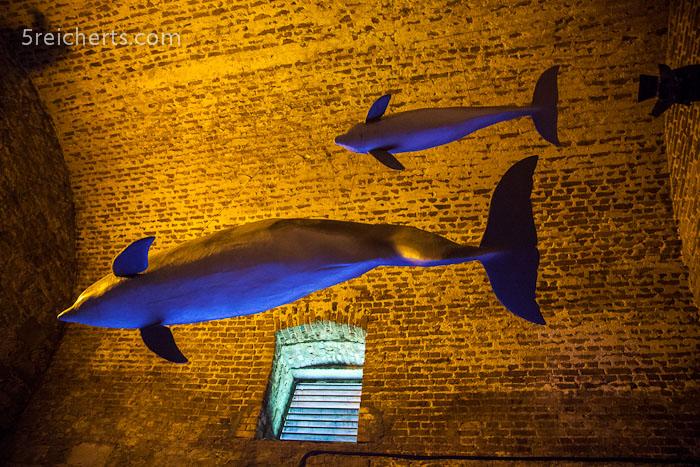 Modelle von Bottlenose Delfinen im Ice House - hier werden die Delfine bis zu 4m lang