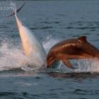 spielende Delfine