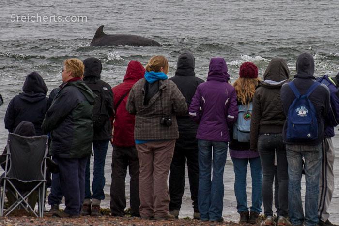 So nah am Strand kann man die Delfine sehen