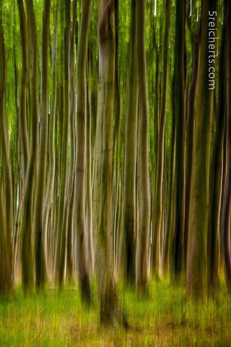 Bäume, Jasmund, Insel Rügen