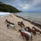 Pferde auf dem Weg in den provisorischen Stall