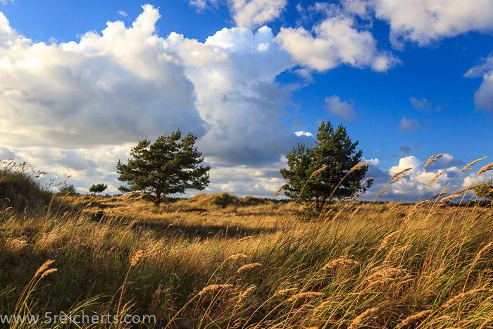Boddenlandschaft in Prerow, Ostseeküste