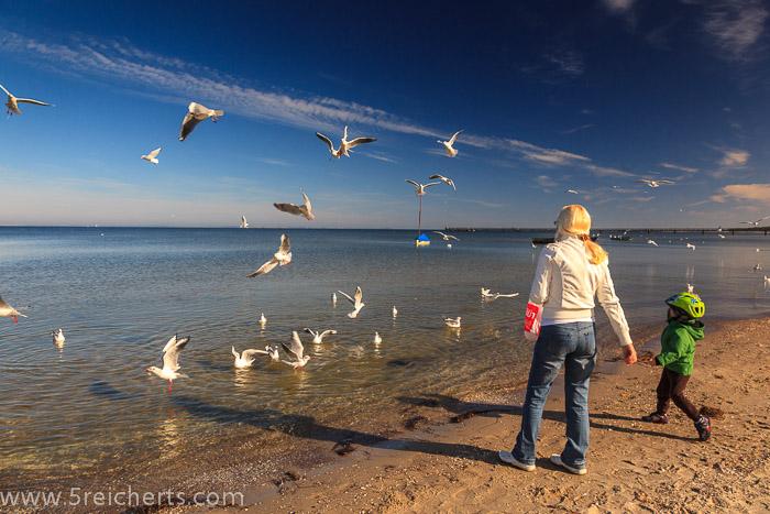 Oma und Enkel füttern Möwen, immer ist auch eine Krähe dabei, Ostsee