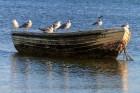 Möwen ruhen sich auf Boot aus, Lubmin, Ostsee