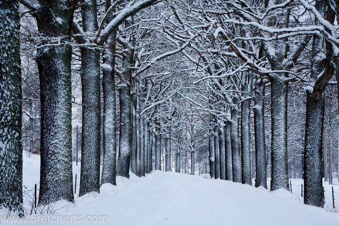 winterliche Allee in Schweden