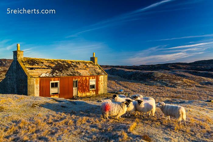 das alte Haus und die Schafe von Malcom