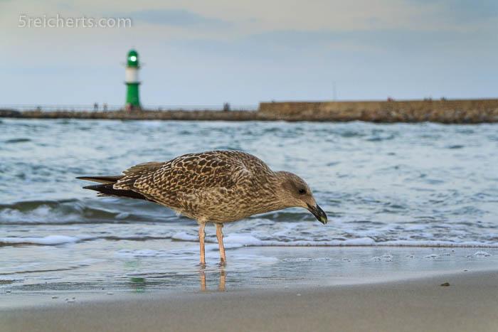 Möwe am Strand von Warnemünde