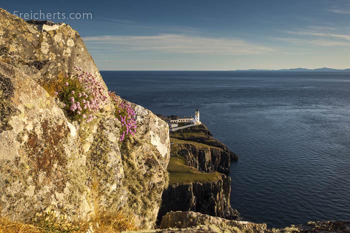 Strandgrasnelken und Leuchtturm Neist Point, Isle of Skye, Schottland