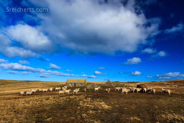 Die Schafe werden gefüttert
