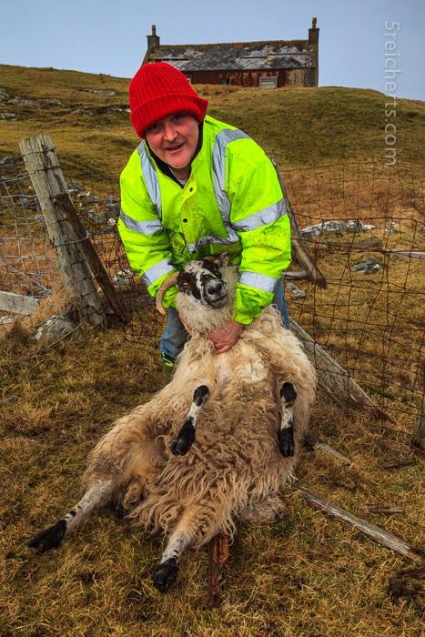 Malcom untersucht den Knöchel des Schafs