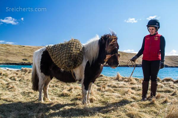 Pony mit Tragegestell. hier ist Heu drinnen, was dazu führte, dass das Pony nur essen wollte