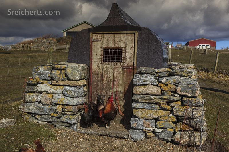 Entenhaus mit Bootsdach, Shetland