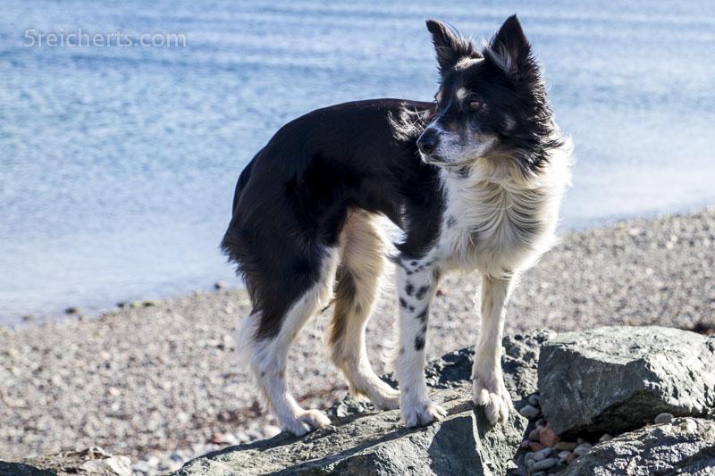 Jan und Pete's Hund am Strand