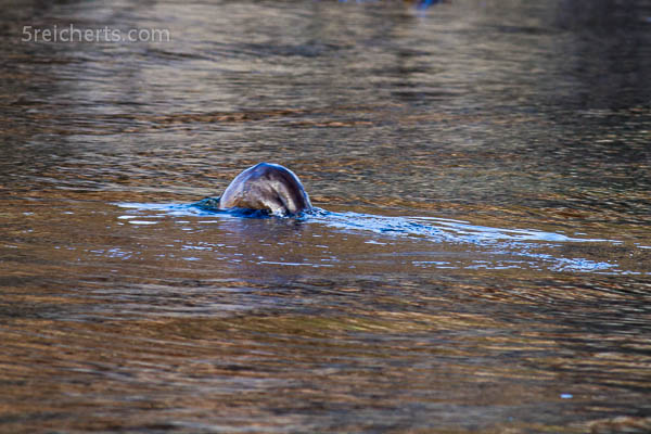 Otterhintern, mehr war nicht drin :-)
